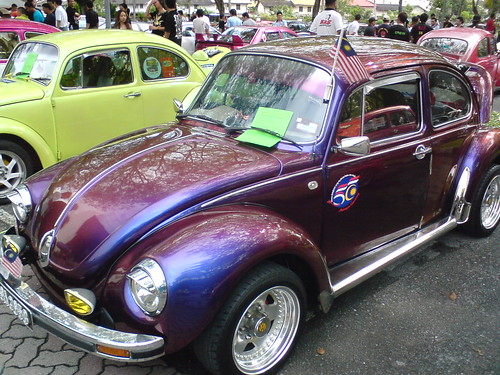 Purple Bug, Front