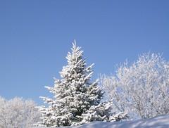 Blue Sky after a snowfall