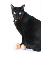 Cats Are Bigger Than Eggs