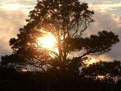 Assateague Island, ML (Silent Orchestra) Tags: sunset tree nature sunrise island maryland assateagueisland assateague silentorchestra asseateagueislandmaryland assateagueislandml laughlovehope