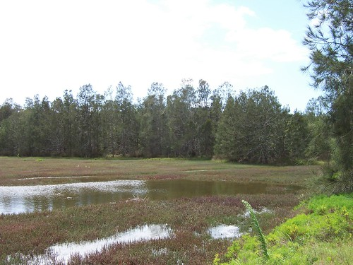 Wetland Lillipilli Street Davistown