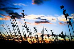 duro da perdere (Cina's Photo) Tags: sardegna sky cloud mare image explore cielo colored colori liquid lux trasparente cina luce important emozioni marcocina