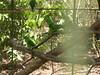 Green Parrots At Crocodile Farm (Bradfordian Cliff) Tags: green philippines parrot palawan crocodilefarm palawanwildliferescueandconservationcenter
