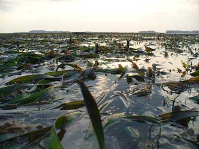 Seagrass-P1060136