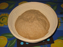 whole wheat sourdough in the brotform