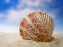 Shell game 1 (James Jordan) Tags: sky beach wow studio sand shell 100v10f seashell scallop tabletop mywinners platinumphoto aplusphoto diamondclassphotographer