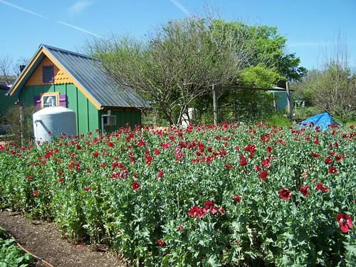 Natural Gardens, Austin TX