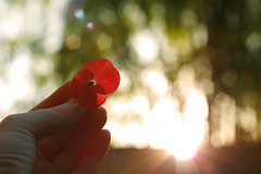 A New Day (priska febrinia) Tags: morning red hand bokeh flare tinyflower magicallight magicaltime