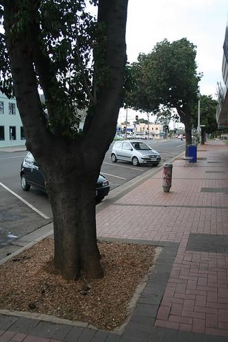 20080720_0419 Avenue of Honour, Duncans Road, Werribee