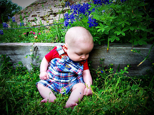 Jake-bluebonnets