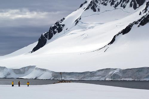 Miniscule Travelers in Dorian Bay, Antarctica