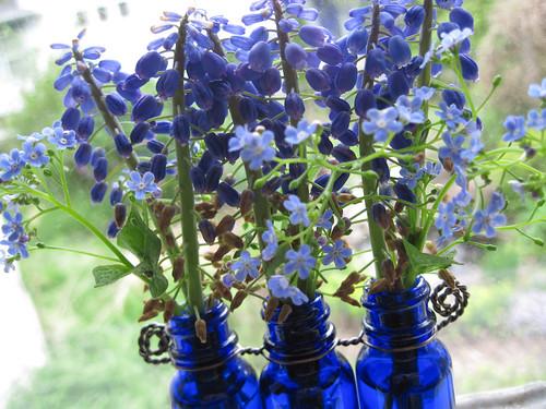 Grape Hyacinths 4