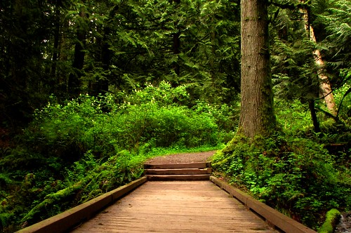 Path to Paraise