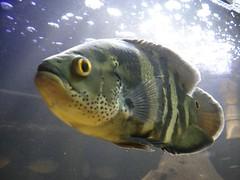 fish nature animal aquarium tank display exhibition ibirapuera conscience