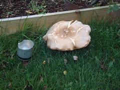 071106-mushroom003