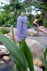 LabourDay18.jpg (chloecss) Tags: labourday botanicgardens 26labourdaythebotanics