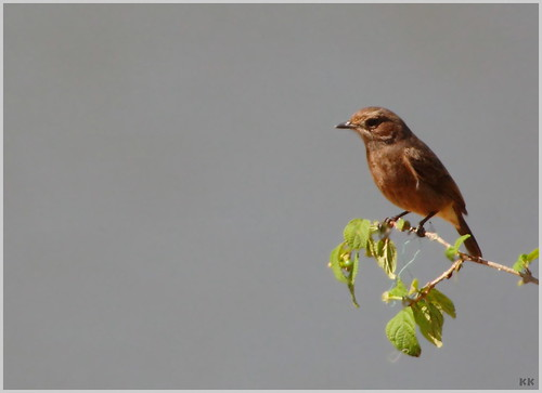 birdie_3