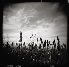 make way (whickus) Tags: camera sky 120 6x6 film field clouds mediumformat toy blackwhite holga kodak harvest 11 plastic crop epson hp5 vignette ilford 120n xtol v700 classicblackwhite 12min whickus