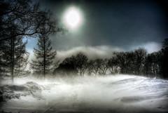 Winnipeg Winter Storm (bryanscott) Tags: park city blue trees winter sky sun snow storm cold winnipeg shine wind windy manitoba hdr assiniboine