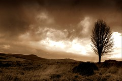 If I could walk 100 miles ! (Nicolas Valentin) Tags: tree sepia clouds landscape scotland scenery moody treesubject 1nv