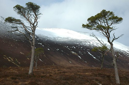 Derry Cairngorm from the Pine wood in Glen Derry
