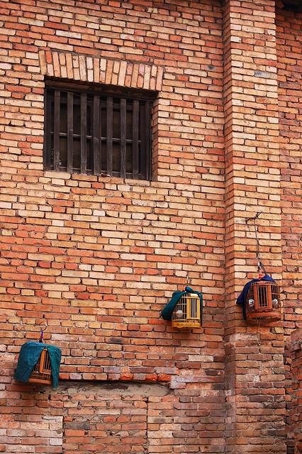 2008.03.09 昆明 / 鳥籠與人籠