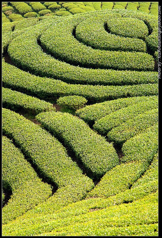2010-0411 八卦茶園