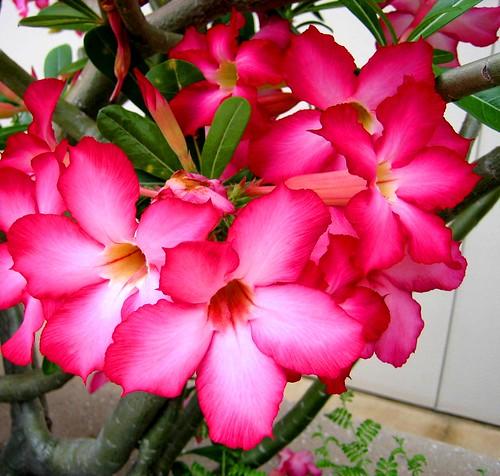 sunset blue · sun · hot pink flowers