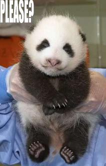 Panda Please