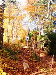 Sentier-d'automne