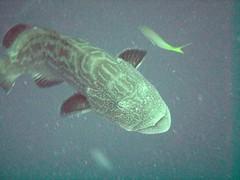 PICT0064 (JoseQ) Tags: blue mar hole great tiburones buceo caribe submarinismo tiburón