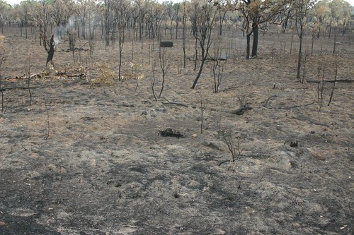 Burnt bush