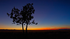 _I___ (Fort Photo) Tags: blue sunset orange newmexico tree nature silhouette bravo wide indigo vivid nm 169 socorro juniper 2007 themoulinrouge magicdonkey mywinners anawesomeshot superbmasterpiece treesubject colourartaward thegardenofzen