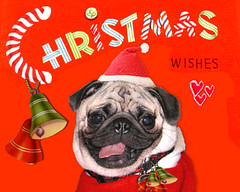 *SMILING PUG* VINTAGE MERRY CHRISTMAS & HAPPY ...