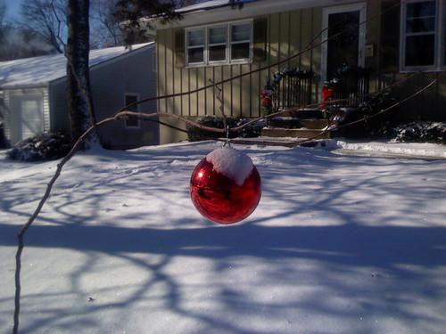 Snowly Charlie's tree