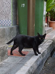 Black cat @ Ann Siang Hill