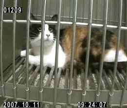 Kinship Circle - 2007-12-31 - Nightmare For Monkeys And Cats In Israeli Lab 2