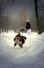 run on the snow..... (betbele) Tags: dog white snow tree love cane child artistic expression pic neve l albero bianco blanc pursuit coda bambino blueribbonwinner artisticexpression 25faves anawesomeshot impressedbeauty aplusphoto diamondclassphotographer flickrdiamond ilovemypic baabshots