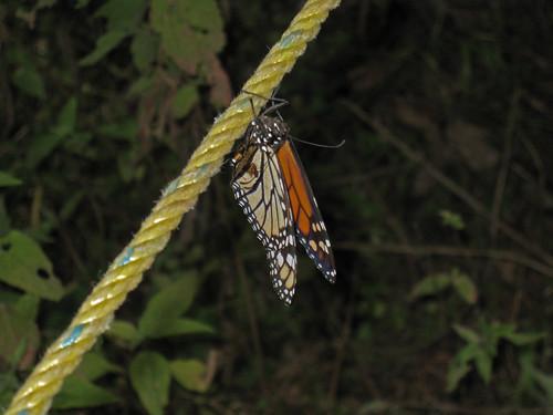 monarcas-3
