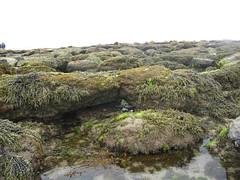 Rocks on the Beach Ocean Grove (arwaddell2001) Tags: beach oceangrove