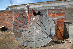 IMG_4127 (locaburg) Tags: dish satellite rooster mop michoacan crowing
