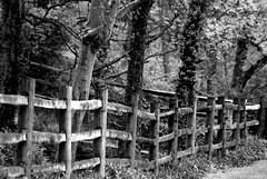 Third Rail (raisinsawdust - (aka: tennphoto)) Tags: bw fence nikon searchthebest farm tennessee explore rails land roadside posts soe d80 abigfave nikond80 infinestyle onlythebestare brillianteyejewel bwartaward goldstaraward photosexplore
