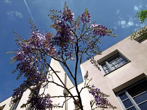 Spring in my street ¬ P5031308