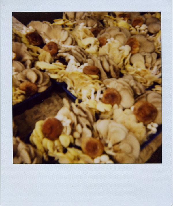 may18: shrooms