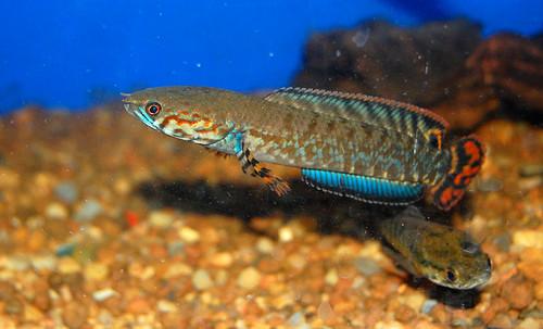 Aquarium Glaser, сентябрь 3528179867_2df1450c17