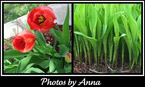 Photos by Anna