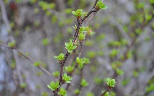 Thorny Springtime