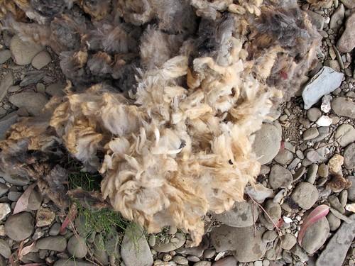 lavar a lã no alentejo