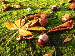 Automn clue - indice d'automne