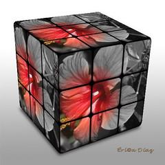 rubi - flower (eri - caperu) Tags: toys flickr hibisco 10faves jardndecasa aplusphoto thatsclassy colourartaward